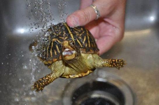 Su Kaplumbağası Su Kaplumbağası Türleri Ve özellikleri Kaplumbaga